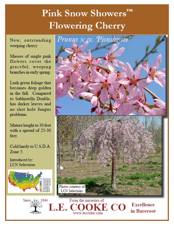 Flowering Cherry Trees (Weeping Forms) - Point of Sale Flyers