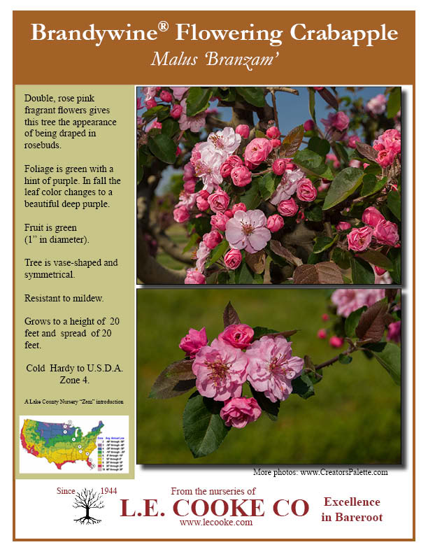 Flowering crabapple trees flowering crabapple trees point of sale flyers mightylinksfo