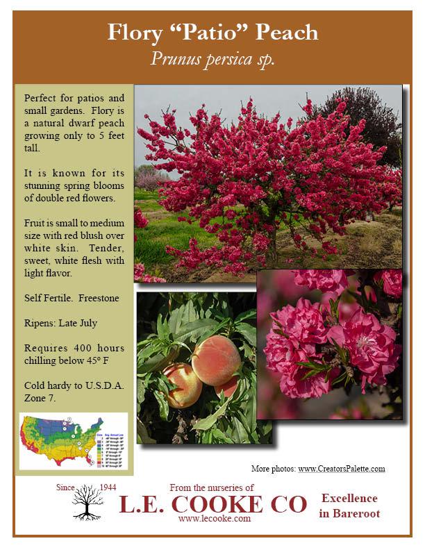 Flory Peach