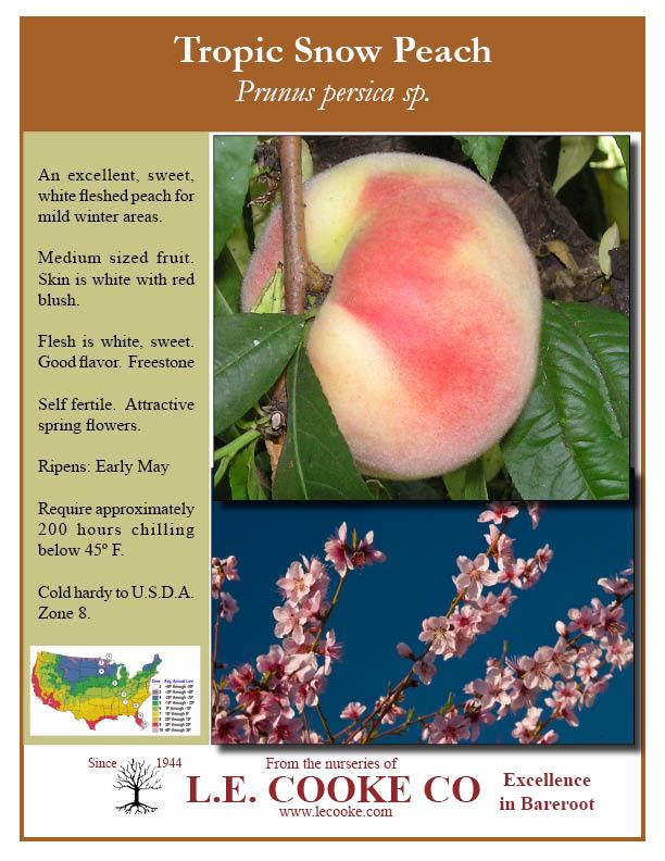 Tropic Snow Peach