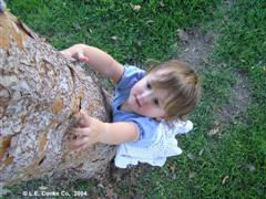 Parvifolia_Elm_Bark_with_Child.jpg